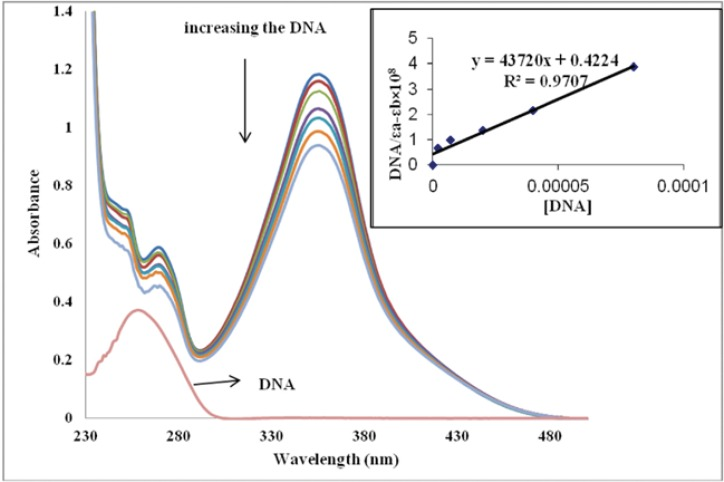 Absorption spectra of the IBT in 0.01 M Tris-HCl buffer (pH 7.4) at room temperature in the presence of increasing amounts of CT-DNA. [IBT] = 50 µM, [DNA] = 0–80 µM from top to the bottom. Arrows indicate the change in absorbance upon increasing the DNA concentration. Inset: plot of [DNA]/εa-εb vs. [DNA]