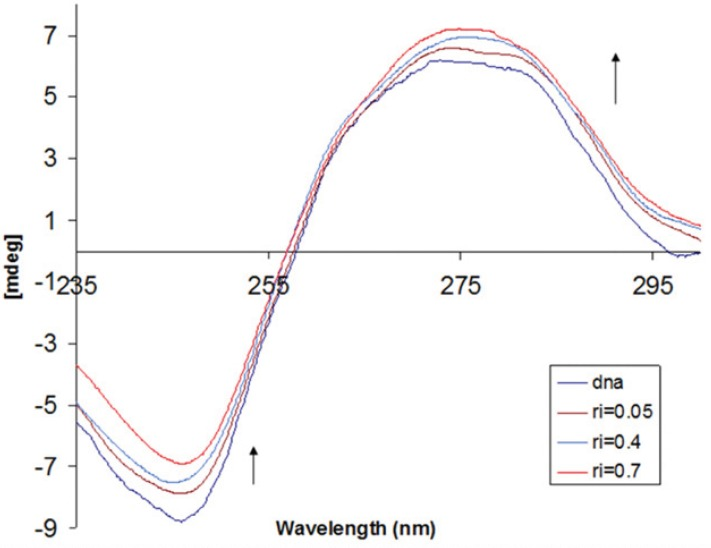 Circular dichroism spectra of DNA (8.0×10 -5 M) in 10 mM Tris-HCl buffer, in the presence of increasing amounts of IBT (ri = [IBT]/[DNA] = 0.0, 0.05, 0.4, and 0.7).