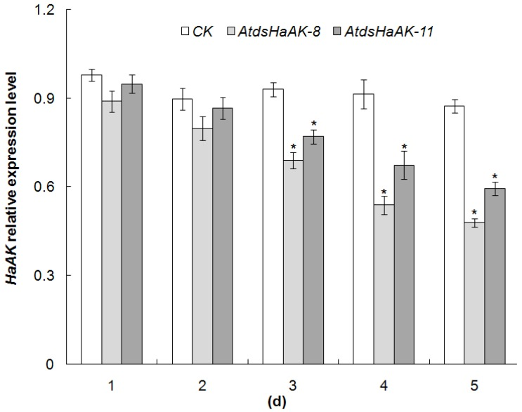 HaAK expression in midguts of H. armigera larvae. Suppression of HaAK transcript levels in midguts of third-instar larve fed on AtdsHaAK-8 and AtdsHaAK-11 plants, respectively. The mRNA abundance was determined by qRT-PCR analysis and Actin gene was amplified as an internal control. The error bar means standard error of three biological replicates (* P