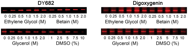 A comparison of potential enhancers on the PCR of α/β-tryptase gDNA using DY682-labeled (left panels) or digoxigenin-labeled (right panels) 3′-primer. The effects of ethylene glycol (0.5 to 2.5 M), betaine (0.5 to 2.5 M), glycerol (0.5 to 2.5 M), DMSO (0.5 to 10%) or no additive was examined on PCRs performed with gDNA amounts of 0.3-0.5 ng and <t>Taq</t> <t>DNA</t> polymerase of 0.75 U per PCR with ethylene glycol or betaine, or 1.2–2.0 ng of gDNA and 1.25 U of Taq DNA polymerase per PCR with glycerol or DMSO. Representative images of the 1017-28 bp amplimers from three independent experiments are shown. Band intensity data is stored in S3 Table .