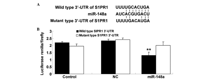 (A) Seed sequences of miR-148a in the wild- and mutant-type 3′-UTR of S1PR1. (B) Luciferase reporter assay data showed that <t>co-transfection</t> of HepG2 cells with miR-148a and wild-type S1PR1 3′-UTR led to a marked decrease in luciferase activity; however, co-transfection with miR-148a and mutant S1PR1 3′-UTR had no effect on luciferase activity, and co-transfection with NC miRNA and wild-type S1PR1 3′-UTR or mutant S1PR1 3′-UTR also showed no difference. ** P