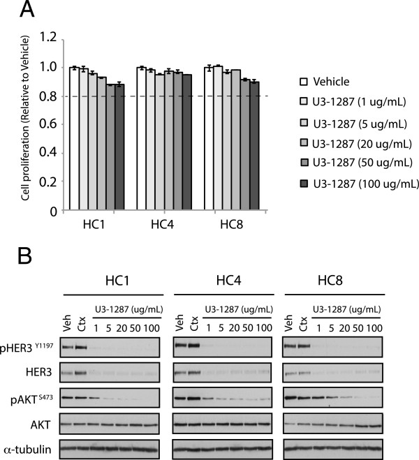 U3-1287 downregulates total and phosphorylation of HER3 as well as AKT phosphorylation, but does not inhibit cell proliferation in Ctx R clones. (A) U3-1287 alone did not inhibit cell proliferation in Ctx R clones. The cell proliferation was measured via crystal violet assay and plotted as a percentage of proliferation relative to the vehicle control cells. Data points are represented as mean ± s.e.m. (n = 3). (B) U3-1287 downregulates total HER3 and phosphorylation of AKT in Ctx R clones. Whole cell lysates were fractionated on SDS-PAGE followed by immunoblotting for the indicated proteins. α-Tubulin was used as a loading control.