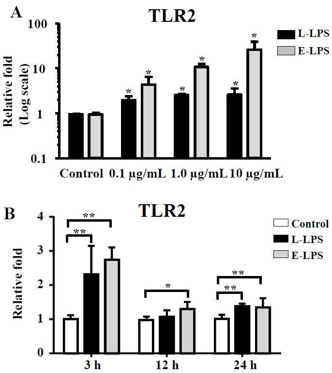 A relative mRNA expression ratio of TLR2 was quantified by qRT-PCR in LPS-induced PEFs_SV40 cells. (A) Cells (1×10 6 cells/well) were isolated after incubation with 0.1, 1.0, and 10.0 μg/mL concentrations of LPS at 3 h. (B) Cells were isolated at 3, 12, 24 h after incubation with 0.1 μg/mL LPS. Data shown is an average of n = 3 biological replicate±SD. Levels of expression and significance are relative to unstimulated cells (at each time point for time-dependent experiments). Asterisks indicate significant differences (* p