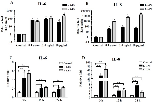 A relative mRNA expression ratio of proinflammatory cytokines were quantified by qRT-PCR in LPS-induced PEFs_SV40 cells. (A) (B) IL-6 and IL-8 mRNA expression in PEFs_SV40 cells after incubation with 0.1, 1.0, and 10.0 μg/mL concentrations of LPS at 3 h. (C) (D) IL-6 and IL-8 mRNA expression in SV40 PEFs after incubation with 0.1 μg/mL LPS at 3, 12, and 24 h. Data shown is an average of n = 3 biological replicate±SD. Levels of expression and significance are relative to unstimulated cells (at each time point for time-dependent experiments). Asterisks indicate significant differences (* p