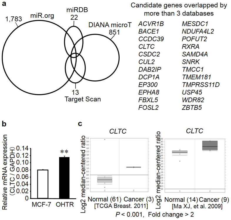 Identification of miR-574-3p target genes in breast cancer. (a) Schematic presentation of miR-574-3p target prediction by in silico analyses. Venn diagrams indicating numbers of candidate hits determined by 4 online prediction algorithms. Candidate genes commonly predicted by > 3 algorithms are described. (b) CLTC mRNA was upregulated in 4-hydroxytamoxifen (OHT)-resistant MCF-7 cells (OHTR cells). Expression levels of CLTC mRNA were determined by quantitative reverse transcription PCR (qRT-PCR) in parental MCF-7 cells and OHTR cells. Data are presented as mean ± SE in triplicate; ** P