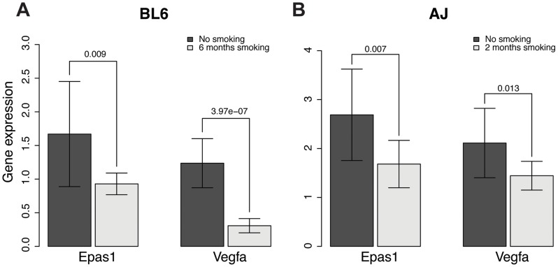 Gene expression levels of Epas1 and Vegfa were lower in chronic smoking mice than non-smoking age-matched mice at the time when COPD develops in different mouse models. A ) Gene expression levels of Epas1 and Vegfa in C57BL/6J mice that develop COPD after 6 months chronic exposure to cigarette smoke. B ) Gene expression levels of Epas1 and Vegfa in A/J mice that develop COPD after 2 months chronic exposure to cigarette smoke. The t-test was used to compare Epas1 or Vegfa expression levels in mice with or without chronic smoke exposure.