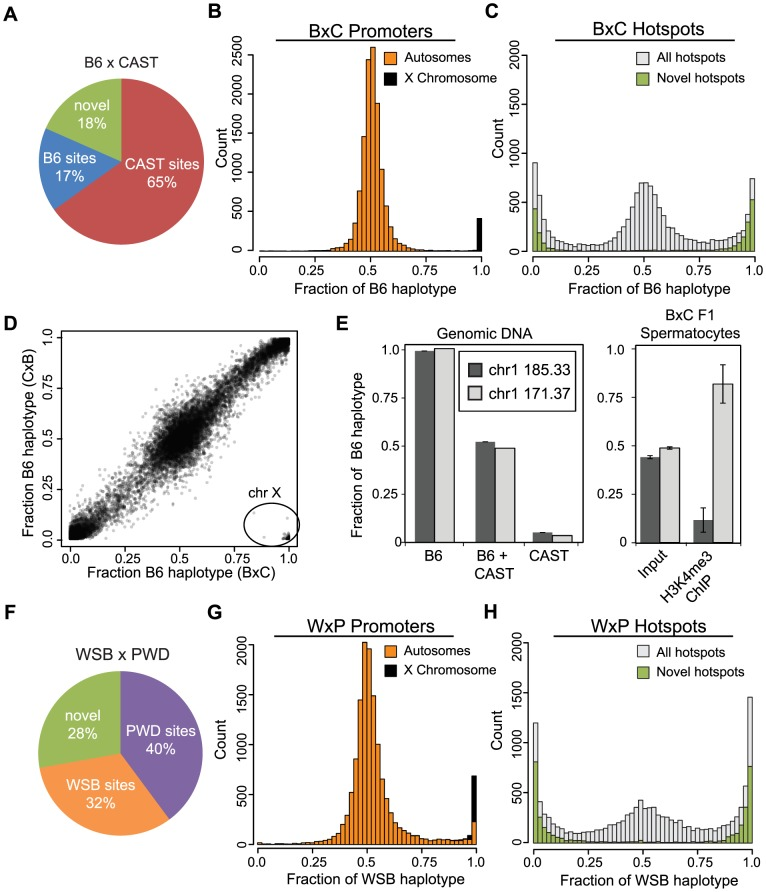 Novel hotspots have biased H3K4me3 modification. (A) F1 hybrid hotspots were classified as B6 or CAST depending on parental origin, or labeled novel. (B) H3K4me3 haplotype ratio for BxC TSS (n = 12,903, orange - autosomes, black - chromosome X). (C) H3K4me3 haplotype ratio for BxC hotspots (grey - all BxC hotspots, n = 12,271; green - novel BxC hotspots, n = 2,298). (D) Scatterplot of haplotype-specific H3K4me3 for hotspots shared between progeny from reciprocal B6 and CAST crosses (n = 10,977, r = 0.978 without X chromosome). 163 hotspots in lower right (circle) are all on the chromosome X. Black shading reflects signal density. (E) Left - Haplotype-specific PCR showing from genomic DNA samples for hotspots chr1 185.33 Mb and chr1 171.37 Mb. Right - Haplotype-specific PCR from spermatocytes before or after enrichment for H3K4me3 (n = 4, error bars - S.D.). (F) The parental identity and fraction of hotpots in WxP F1 hybrids. (G) H3K4me3 haplotype ratio for WxP TSS (n = 15,856, orange - autosomes, black - chromosome X). (H) H3K4me3 haplotype ratio for WxP hotspots (grey - all WxP hotspots, n = 8,360; green - novel WxP hotspots, n = 2,325).