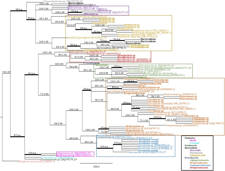 """Bacterial phylogeny from shed leech mucus . Molecular phylogenetic tree of 16S rRNA gene sequences amplified from adult H. verbana mucosal secretions. A MP analysis tree created from approximately 900 aligned nucleotides is shown. Significance values, represented in MP bootstrap and Bayesian PP (BS/PP), are indicated at respective nodes. A bolded branch with """"BS/n.a."""" significance value refers to a branch that was not statistically supported by Bayesian analysis. Branch lengths are measured in number of substitutions over the whole sequence. Representative 16S rRNA sequences obtained within shed mucus are in bold, with other sequences obtained from NCBI indicated by accession numbers. Previously described leech isolates obtained through study of the gut and bladder systems are indicated by an * (Worthen et al., 2006 ) or # (Kikuchi et al., 2009 ), respectively. Color blocks indicate the Class housing the representative sequences."""