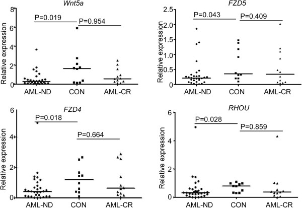 Wnt5a , FZD 4, FZD5 and RHOU are significantly down-regulated in newly diagnosed AML patients' bone marrow samples compared to normal or CR group. Expression levels of Wnt5a , FZD4 , FZD5 and RHOU were determined by <t>RT-PCR</t> analysis of bone marrow samples from AML patients, either newly-diagnosed (AML-ND) or in complete remission (AML-CR), and healthy donors (CON) using <t>SYBR</t> Green PCR Master Mix. The Mann–Whitney test was used to compare differences between the two groups.