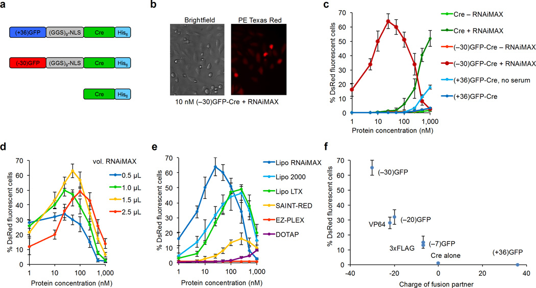 Delivery of Cre recombinase to cultured human cells. ( a ) Fusion of either highly cationic (+36)GFP or highly anionic (−30)GFP to Cre recombinase. We used a HeLa reporter cell line that expresses DsRed upon Cre-mediated recombination to evaluate Cre delivery efficiency. ( b ) HeLa dsRed cells treated with 10 nM (−30)GFP-Cre and 1.5 µL of the cationic lipid formulation RNAiMAX. Cells were visualized after incubation for 48 hours in media containing 10% fetal bovine serum (FBS). ( c ) Delivery of (+36)GFP-Cre in 10% FBS media or in serum-free media, and (−30)GFP-Cre with or without the cationic lipid RNAiMAX (0.8 µL) in full-serum media. ( d ) Effect of cationic lipid dose on functional (−30)GFP-Cre delivery efficacy after 48 hours. ( e ) Comparison of several commercially available cationic lipids and polymers for functional delivery efficacy of (−30)dGFP-Cre. ( f ) RNAiMAX-mediated delivery of multiple anionic peptide or protein sequences fused to Cre. The net theoretical charge of the VP64 activation domain and the 3xFLAG tag is −22 and −7, respectively. All experiments were performed with 25 nM protein in 48-well plate format using 275 µL DMEM with 10% FBS and no antibiotics. Error bars reflect s.d. from three biological replicates performed on different days.
