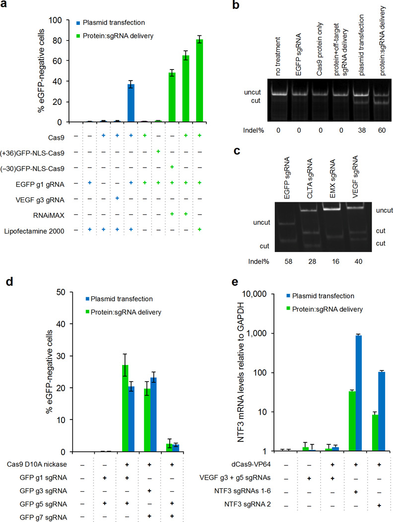 Delivery of Cas9:sgRNA, Cas9 D10A nickase, and dCas9-VP64 transcriptional activators to cultured human cells. ( a ) Green entries: U2OS EGFP reporter cells were treated with 100 nM of the Cas9 protein variant shown, 0.8 µL of the cationic lipid shown, and either 50 nM of the sgRNA shown for Cas9 protein treatment, or 125 nM of the sgRNA shown for (+36)dGFP-NLS-Cas9 and (−30)dGFP-NLS-Cas9 treatment. The fraction of cells lacking EGFP expression was measured by flow cytometry. Blue entries: plasmid DNA transfection of 750 ng Cas9 and 250 ng sgRNA expression plasmids using 0.8 µL Lipofectamine 2000. ( b ) T7 endonuclease I (T7EI) assay to measure modification of EGFP from no treatment (lane 1), treatment with EGFP-targeting sgRNA alone (lane 2), Cas9 protein alone (lane 3), Cas9 protein + VEGF-targeting sgRNA + RNAiMAX (lane 4), DNA transfection of plasmids expressing Cas9 and EGFP-targeting sgRNA (lane 5), or Cas9 protein + EGFP-targeting sgRNA + RNAiMAX (lane 6). ( c ) T7EI assay of simultaneous genome modification at  EGFP  and three endogenous genes in U2OS cells 48 hours after a single treatment of 100 nM Cas9 protein, 25 nM of each of the four sgRNAs shown (100 nM total sgRNA), and 0.8 µL RNAiMAX. ( d ) Delivery of Cas9 D10A nickase and pairs of sgRNAs either by plasmid transfection or by RNAiMAX-mediated protein:sgRNA complex delivery under conditions described in ( a ) with 50 nM  EGFP -disrupting sgRNAs (25 nM each) for protein delivery, and 250 ng sgRNA-expressing plasmids (125 ng each) for DNA delivery.  EGFP -disrupting sgRNAs g1 + g5, or g3 + g7, are expected to result in gene disruption, while g5 + g7 target the same strand and are expected to be non-functional. ( e ) Delivery of dCas9-VP64 transcriptional activators that target  NTF3  either by DNA transfection or RNAiMAX-mediated protein delivery. Error bars reflect s.d. from six biological replicates performed on different days.