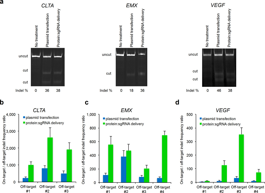 DNA sequence specificity of Cas9-mediated endogenous gene cleavage in cultured human cells by plasmid transfection or by cationic lipid-mediated protein:sgRNA delivery using 1.6 µL RNAiMAX complexed with 100 nM Cas9 and 100 nM sgRNA. ( a ) T7EI assay was performed for on-target modification of endogenous CLTA , EMX , and VEGF genes in HEK293T cells. ( b–d ) On-target:off-target DNA modification ratio resulting from Cas9:sgRNA for plasmid transfection or cationic lipid-mediated protein:sgRNA delivery. The conditions for each treatment were adjusted to result in ~10% on-target cleavage, enabling a comparison of DNA cleavage specificity between the two delivery methods under conditions in which on-target gene modification efficiencies are similar. P values for a single biological replicate are listed in Supplementary Table 2 . Each on- and off-target sample was sequenced once with > 10,000 sequences analyzed per on-target sample and an average of > 111,000 sequences analyzed per off-target sample ( Supplementary Table 2 ). All protein:sgRNA deliveries and plasmid transfections were performed in 24-well format using 1.6 µL RNAiMAX in 550 µL DMEM-FBS without antibiotics. Error bars reflect s.d. from three biological replicates performed on different days.