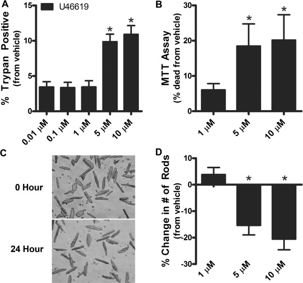 U46619 increases cell death in cardiomyocytes. A . HL-1 cardiomyocytes were incubated with increasing concentrations of U46619 (0.1-10 μM) and vehicle for 24 h. U46619 increased cell death at 5 and 10 M as measured by trypan blue staining (n = 3; p