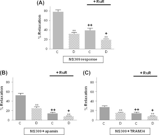 Changes (in%) of NS309-induced responses of mesenteric arteries from control and diabetic rats in response to NS309. (A) NS309 (1 μM)-induced relaxations were reduced in diabetics arteries. The IK Ca response, in the presence of 100 nM apamin (B) and the SK Ca response, in presence of 1 μM TRAM-34 (C) were also affected by diabetes. Relaxations of arteries mediated by NS309, opening of IK Ca (B) or SK Ca (C) were markedly reduced by RuR. Results shown are means ± s.e.mean ( n ⩾ 5). One-way ANOVA; * P