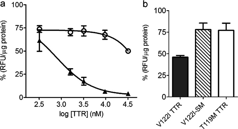 Native V122I TTR competes with f-V122I TTR for the same interaction sites in human cardiomyocytes ( a ) AC16 cells were co-incubated with f-V122I TTR (320 nM) and increasing concentrations of amyloidogenic V122I TTR or non-amyloidogenic T119M TTR for 3 h at 4°C. The fluorescence associated with the cells was measured and normalized for total protein content. The data were normalized by the fluorescence from the samples incubated with f-V122I TTR only (100%). Filled triangles, V122I TTR; open circles, T119M TTR. ( b ) AC16 cells were co-incubated with f-V122I (600 nM) and equimolar amounts of unlabelled V122I TTR, T119M TTR, V122I stabilized with a small molecule (V122I-SM) or HBSS. Fluorescence associated with the cells was measured, normalized by total protein content and plotted as percentage with respect to the fluorescence of cells that had been incubated with f-V122I and HBSS only. The data show that similarly to T119M TTR, V122I-SM is unable to efficiently displace cell-associated f-V122I, whereas under the same conditions V122I TTR displaces more than 50% of f-V122I TTR.