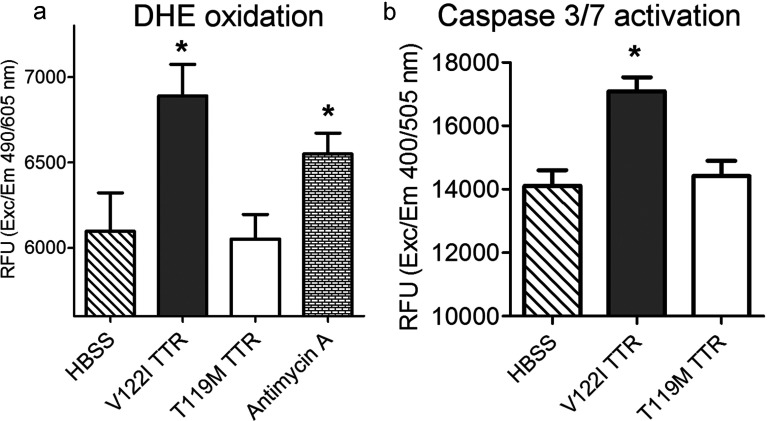 Amyloidogenic V122I but not non-amyloidogenic T119M <t>TTR</t> induces the generation of superoxide species and caspase 3/7 activation in human cardiomyocytes ( a ) AC16 cells were treated with V122I TTR, T119M TTR, Antimycin A (positive control) or <t>HBSS</t> (vehicle control) for 24 h. The insults were then removed and the cells loaded with the superoxide-specific reagent DHE as detailed in the experimental section. Red fluorescence produced by DHE oxidation is shown. ( b ) AC16 cells were treated with V122I TTR, T119M TTR or, HBSS for 6 h at 37°C. Cell lysates were prepared as detailed in the experimental section and were added to Ac-DEVD-AFC caspase 3/7 substrate. Fluorescence intensity generated by cleavage of the substrate was measured. Asterisks in both panels indicate statistical significance with P