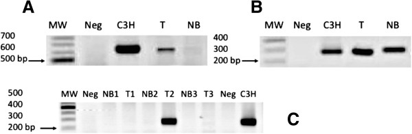 End-point PCRs for detection of the MMTV env g ene in the samples. A . First nested PCR round resulting in a 660-bp MMTV env g ene fragment, exemplifying the expected results defining positive detection. B . Second nested PCR round resulting in a 250-bp fragment, exemplifying the expected results defining positive detection. C . Three samples that exemplify positive and negative detection of the 250-bp PCR product. MW: 100-bp molecular weight ladder; Neg: non-template negative control; C3H: strain with MMTV env g ene inserted into <t>pBR322</t> plasmid, used as a positive control; T: tumor; and NB: unaffected tissue.
