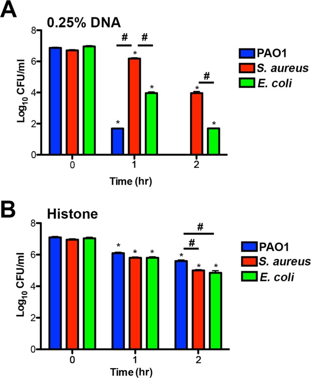 Bacterial species differ in their susceptibility to killing by DNA and histones. ( A ) P. aeruginosa PAO1, S. aureus and E. coli killing assay in the presence of 0.25% DNA (w/v). PAO1 was significantly more sensitive at both eDNA concentrations relative to the highly tolerant S. aureus . ( B ) P. aeruginosa PAO1, S. aureus and E. coli killing assay in presence of 1.25 µg/mL histones. Bacterial survival was quantified after 1 and 2 hours by colony count, and statistical significance assessed by 2-tailed student t-tests. * denotes statistical differences (P