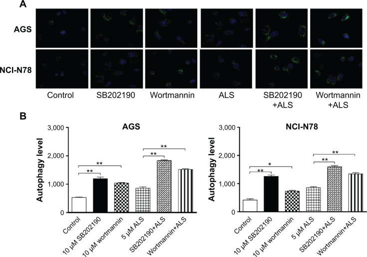 ALS induces autophagy via PI3K-mediated and p38 MAPK-mediated signaling pathways in AGS and NCI-N78 cells. Notes: AGS and NCI-N78 cells were pretreated with <t>SB202190</t> or wortmannin for 1 hour and then incubated for another 24 hours in the presence or absence of 1 μM ALS. ( A ) Representative images show autophagy of AGS and NCI-N78 cells. ( B ) Bar graphs show the percentage of autophagic AGS and NCI-N78 cells. Data are the mean ± SD of three independent experiments. * P