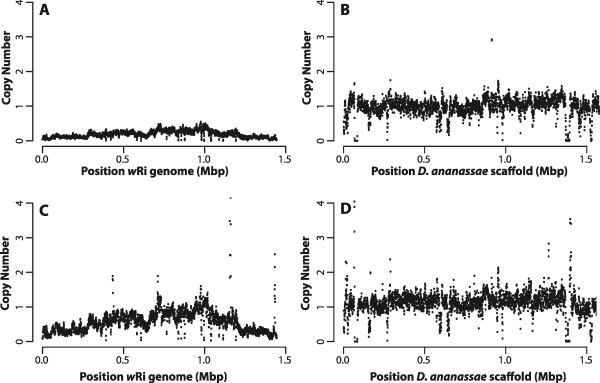 Coverage of India sequencing data. The copy number for the 3 kbp mate pair library from the India (Panels A and B) , and India x Florida (Panels C and D) genomic DNA was calculated over a 1 kbp window every 500 bp and plotted against the reference w Ri genome (left) and the first 1.5 Mbp of the largest scaffold (gi|109914400|gb|CH902617.1|) of the Drosophila ananassae caf1 assembly. The India genome shows the same relative pattern of duplication but is less abundant than single copy nuclear genes, as is the genome from offspring of a backcross of India with Florida. The spikes in the coverage for the India × Florida line reflect the mapping of transposase sequences.