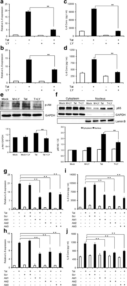 HIV-1 Tat-mediated expression of IL-6 and IL-8 involves PI3K/Akt pathway. (a-f) Astrocytes were pretreated with a specific PI3K inhibitor (LY294002) for 1 hour prior to transfection. (a, b) The expression levels of IL-6 and IL-8 at the level of mRNA were determined at 6 hours post transfection by real time RT-PCR. The values represented are normalized to their mock-transfected controls. (c, d) IL-6 and IL-8 protein concentrations in the cell culture supernatants at 48 hours post transfection were determined by multiplex cytokine assay. (e) Astrocytes were either mock-transfected or transfected with HIV-1 Tat plasmid for duration of 6 hours and p-Akt levels were measured in whole cell extracts. (f) Astrocytes were transfected for a duration of 6 hours and translocation of p65 was measured. Glyceraldehyde 3-phosphate dehydrogenase (GAPDH) and LaminB were used as internal loading controls for cytoplasmic and nuclear protein fractions, respectively. A representative Western blot is shown in figures (e) and (f) . (g-j) Astrocytes were transfected with either scrambled or Akt1 or Akt2 or Akt3 siRNA for a duration of 48 hours, followed by either mock transfection or transfection with HIV-1 Tat plasmid. (g, h) The levels of IL-6 and IL-8 at mRNA level were determined by real time RT-PCR at 6 hours post transfection. (i, j) The protein concentrations of IL-6 and IL-8 in cell culture supernatants at 48 hours post transfection were determined by multiplex cytokine assay. Each experiment was done at least in triplicate and each bar represents the ± SE of three individual experiments. Statistical analyses was performed by one-way ANOVA and ** denotes P -value of ≤ 0.01 and * denotes P -value of ≤ 0.05.