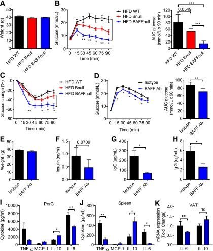 BAFF-deficient (BAFF null ) and anti-BAFF antibody (Ab)–treated obese mice exhibit superior glucose metabolic control compared with WT and B null mice. Body weights ( A ), GTT with AUC ( B ), and ITT ( C ) of HFD WT, BAFF null , and B null mice ( n = 5). GTT with AUC ( D ), body weights ( E ), and fasting insulin ( F ) of HFD WT mice 4 weeks after they received anti-BAFF antibody or isotype control ( n = 5). IgG concentration in serum ( G ) and VAT lysate ( H ) 5 weeks after anti-BAFF antibody treatment ( n = 5). Cytokine concentrations in 24-h cultures of PerC ( I ) or spleen ( J ) cells stimulated with LPS from isotype control and BAFF antibody–treated mice ( n = 5). K : mRNA expression in VAT from isotype control and BAFF antibody–treated mice ( n = 4). Values are given as mean ± SEM. * P