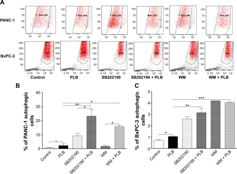PLB regulates autophagy via p38 MAPK and PI3K/Akt signaling pathways in PANC-1 and BxPC-3 cells. Notes: Cells were pretreated with 10 μM SB202190 or 10 μM WM for 1 hour and then incubated with or without 5 μM PLB for another 24 hours. ( A ) Flow cytometric plots of PANC-1 cells; ( B ) flow cytometric plots of BxPC-3 cells; ( C ) bar graphs showing percentage of autophagic cells in PANC-1 and BxPC-3 cells. Data represent the mean ± SD. * P