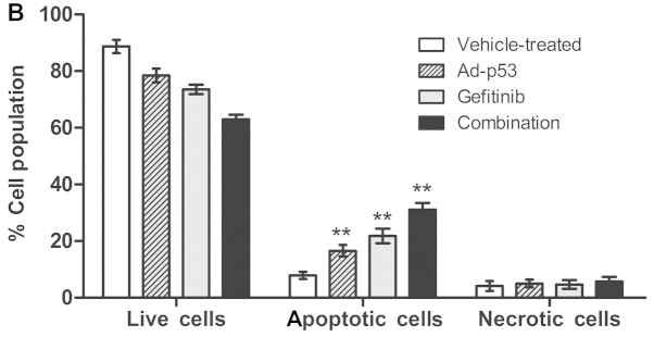 Induction of apoptosis following treatments with 3 μM of gefitinib alone, MOI of 100 of Ad-p53 alone or in combination for 48 h. The apoptosis of MDA-MB-468 cells was detected via Annexin V/FITC using flow cytometry. (A) Percentage of apoptotic cells was obtained from UR and LR panels in each scatter plot for all the treatment groups. (B) Data represent means ± SEM from three independent experiments. Statistical significance was assessed by ANOVA. Tukey's multiple comparison was applied to compare two subsequent samples. ** P