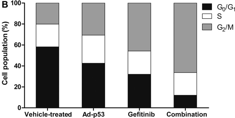 Ad-p53 infection enhances G 2 /M arrest induced by gefitinib. MDA-MB-468 cells were treated with 3 μM of gefitinib alone, MOI of 100 of Ad-p53 alone or in combination. After 48 h, cell cycle distribution was analyzed by flow cytometry at the indicated time. The graph is based on three independent measurements with similar results. Ad-p53, recombinant human p53 adenovirus; MOI, multiplicity of infection.