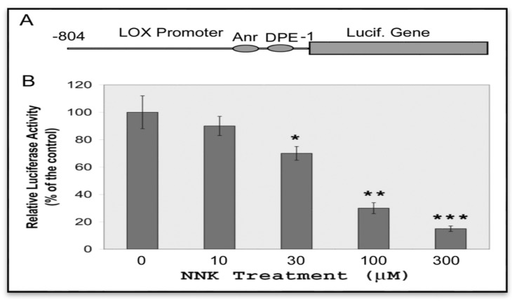 Inhibition of LOX promoter activities in NNK-treated cells. ( A ) Schematic representation of LOX promoter-reporter chimera with the Inr-DPE core promoter. ( B ) NNK inhibition of LOX promoter activities in transfected cells. RFL6 cells were transiently co-transfected with the Prom-804 construct and the pRL-TK vector, an internal control, then treated with NNK at indicated concentrations for 48 h. Luciferase activities in cell lysates were measured by luminometry. Firefly luciferase activities elicited by the LOX promoter were normalized to Renilla luciferase activities derived from the pRL-TK vector and expressed as relative luciferase activities as instructed by manufacturer (Promega). Data shown are the mean ± SD ( n = 3). * p ≤ 0.05, ** p ≤ 0.01, *** p ≤ 0.001 compared with the control (100%).