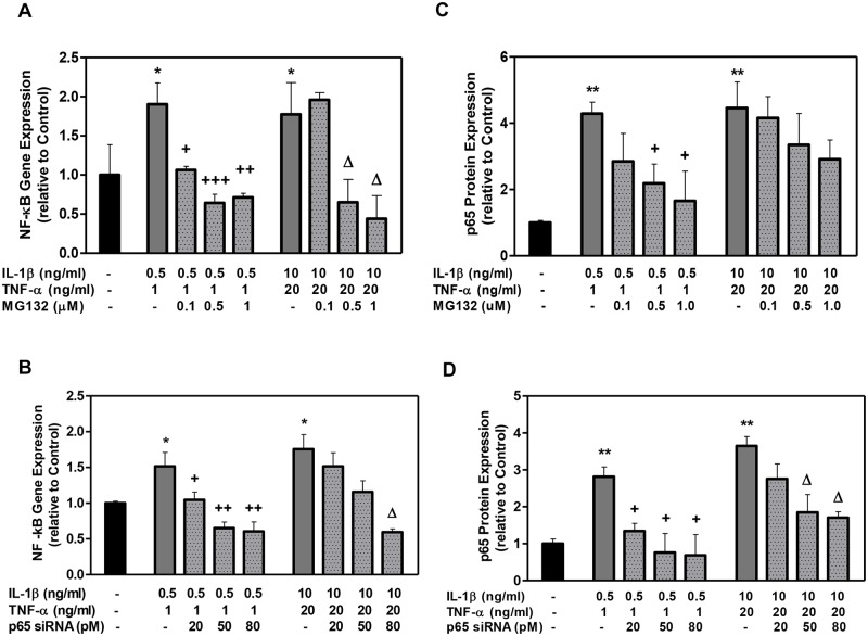 The effect of MG132 protease inhibitor and p65 siRNA on DPSC NF-κB gene expression and p65 protein expression with low- and high-cytokine doses. Cells were exposed to various MG132 or p65 siRNA concentrations for 7 days. NF-κB mRNA (A, B) was assessed using qRT-PCR. NF-κB p65 protein (C, D) was assessed using the Chemiluminescent NF-κB p65 Transcription Factor ELISA assay:. Data are presented as the mean ± S. E. M. of triplicate measures from triplicate experiments. Symbols: Asterisks (*) indicate statistical comparison with control result; plus signs (+) indicate statistical comparison with IL-1β (0.5 ng/ml) and TNFα (1.0 ng/ml) treatment (low cytokine dose); triangle (Δ) indicates statistical comparison with IL-1β (10.0 ng/ml) and TNFα (20.0 ng/ml) treatment (high cytokine dose). Statistical comparison was made using ANOVA testing with Dunnett's posthoc analysis. Statistical significance was represented by *, +, or Δ for p