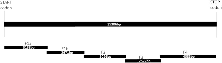 Summary of the strategy adopted to obtain the M. persicae RyR cDNA sequence. Five overlapping fragments (F1a/b, F2, F3 and <t>F4)</t> were initially PCR amplified. Fragments F1a, F1b, F2 and F3 were sub-cloned into pJET1.2blunt vector (Thermo-Fermentas) and fragment F4 was sub-cloned into a <t>TOPO®TA</t> vector (Invitrogen) for sequencing.