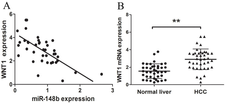 WNT1 inversely correlated with miR-148b levels in HCC tissues. (A) WNT1 was detected in 40 HCC tissues and matched normal liver tissues by qRT-PCR, and the WNT1 abundance was normalized to GAPDH. (B) The relationship between WNT1 and miR-148b expression was explored by Spearman's correlation analysis in HCC tissues. *P