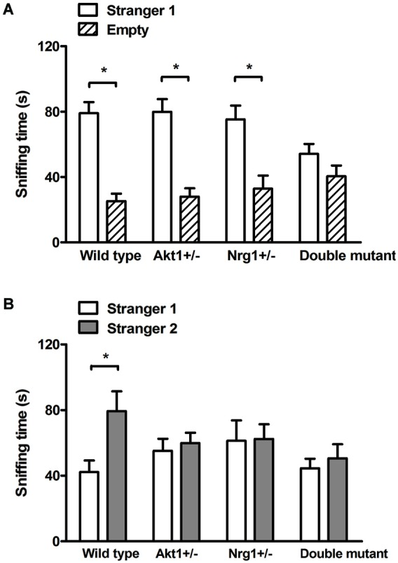 Total sniffing time (means ± SEM sec) of WT, <t>Akt1</t> +/− , Nrg1 +/− , and double mutant mice in the sociability and social recognition task of Experiment 2.2. (A) In the 5-min sociability test, all mice (except double mutant mice) displayed a significant social preference toward the stimulus (i.e., stranger 1) mouse. (B) In the 5-min social recognition test (5-min after the end of the sociability test), only WT mice displayed a significant preference toward a novel (i.e., stranger 2) mouse. * p