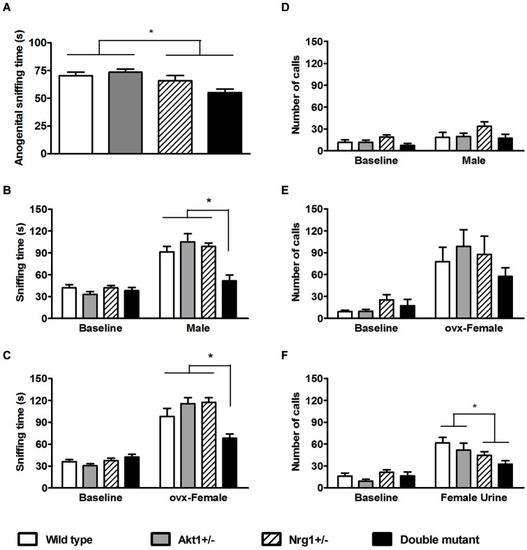 Total sniffing time and number of calls (means ± SEM) of WT, Akt1 +/− , Nrg1 +/− , and double mutant mice in the social interaction and social communication task in Experiment 3. (A) The total anogenital sniffing time during a 5-min direct encounter with an estrous female mouse. (B,C) The total sniffing time during a 5-min non-stimulus baseline and a 5-min indirect social encounter with another male or an ovariectomized (OVX) female, respectively. (D,E,F) Total number of ultra-sonic vocalization (USV) calls during a 5-min non-stimulus baseline and a 5-min indirect social encounter with another male, an OVX female, and 15 µl of fresh female urine, respectively. * p