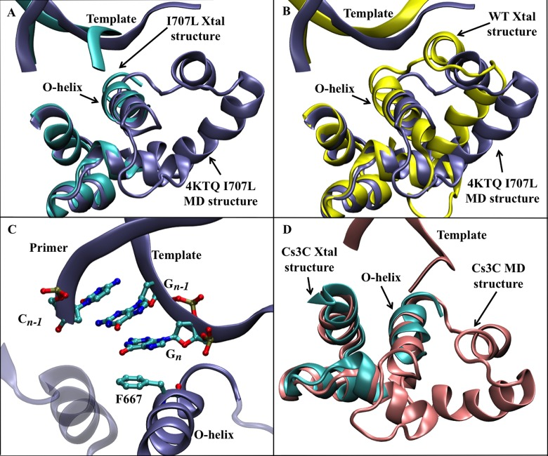 A comparison of the <t>I707L</t> <t>KlenTaq1</t> <t>DNA</t> polymerase structures from MD simulations relative to crystal structures. (A) An overlay of the final MD structure (ice blue ribbons) with the I707L crystal structure (cyan ribbons). (B) An overlay of the final MD structure (ice blue ribbons) with the wild-type crystal structure (yellow ribbons). (C) A depiction of the active site from the simulated I707L mutant showing the four-residue pi-stacking interaction occurring between Phe667 on the O-helix of DNA polymerase, the base of C n-1 on the DNA primer strand, and the bases of G n –1 and G n from the template strand. The residue numbers correspond to the original 4KTQ.pdb. (D) A comparison of the I707L mutant binary complex (cyan) with the final structure of a molecular dynamics simulation of the I707 mutant binary complex at 2.2 μs (pink).