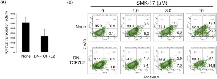 Expression of <t>DN-TCF7L2</t> reduced SMK-17-induced apoptosis in HCT 116 cells. HCT 116 cells were transfected with DN-TCF7L2. (A) Luciferase activity was monitored through co-transfection with the TOPFlash and Renilla luciferase plasmids. (B) HCT 116 cells expressing DN-TCF7L2 were treated with the indicated concentrations of SMK-17 for 48 h and stained with annexin V/APC and 7-AAD. Cells were analyzed by flow cytometry with gates including only EGFP-positive cells.