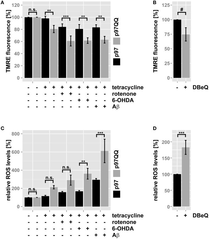 Inactivation of p97 impairs mitochondrial function during neurotoxic stress . (A) <t>SH-SY5Y</t> cells stably expressing p97 or dominant-negative p97QQ under control of the Tet-On promoter were induced with tetracycline for 2 h or left uninduced and treated with 5 μM rotenone, 75 μM 6 OHDA, or 50 μM Aβ for an additional 6 h. Cells were stained with the mitochondrial membrane sensitive dye TMRE and analyzed by flow cytometry. (B) SH-SY5Y cells were treated with the p97 inhibitor DBeQ and mitochondrial membrane potential was measured by flow cytometric analysis of TMRE fluorescence. (C) Cells treated as in (A) were stained with the ROS-sensitive dye MitoSox and mitochondrial ROS generation was measured using flow cytometry. (D) SH-SY5Y cells were treated with the p97 inhibitor DBeQ and mitochondrial ROS generation was measured by flow cytometric analysis of MitoSox fluorescence. Statistical analysis was performed using pair-wise t -tests with Holm p -value adjustment for (A,C) , and a general linear model (SPSS) for (B,D) . Statistical significance is marked with n.s. for not significant, # p