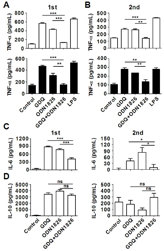 Costimulation and/or restimulation of TLR7 and TLR9 decreased the levels of proinflammatory cytokine production in mouse macrophages. (A) Mouse macrophages were stimulated with either an agonist for TLR7 (GDQ) or TLR9 (ODN 1826) or both (GDQ + ODN1826) overnight (1st), and the production of TNF-α in the supernatant was measured using ELISA. <t>LPS</t> stimulation was introduced as a positive control. □ Raw264.7 macrophage cell line, and ▪ BMDMs from Balb/c mice. (B) After the first stimulation, the cells were washed with PBS and incubated with culture media overnight. Subsequently, the cells were restimulated with TLR agonists for 1 h (2nd), and the production of TNF-α was measured using ELISA. The levels of IL-6 (C) and IL-10 (D) were measured in RAW264.7 cells under the same conditions. Significant differences were indicated as *P