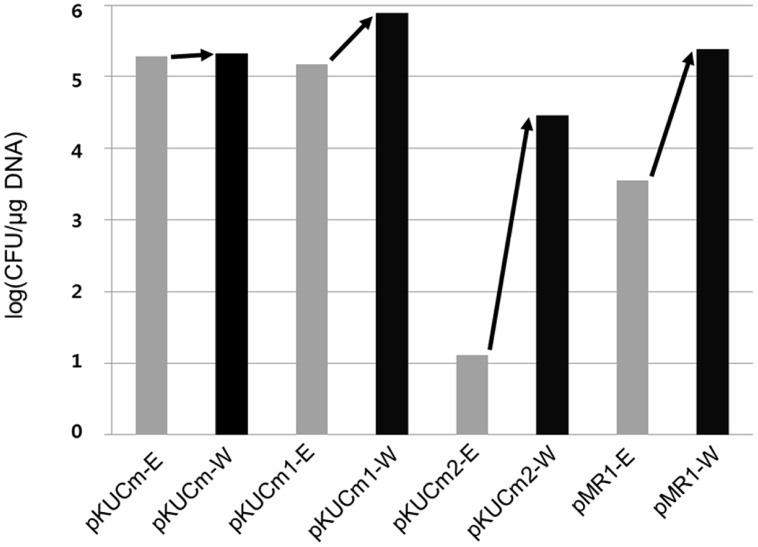 Evaluation of pKUCm series and pMR1 vector re-transformation efficiencies from W. confusa ATCC 10881 into the same strain (black scale bar), compared with the vectors prepared from Escherichia coli DH5α into W. confusa ATCC 10881 (gray scale bar). Re-transformation of the vectors from Weissella improved the transformation efficiency.