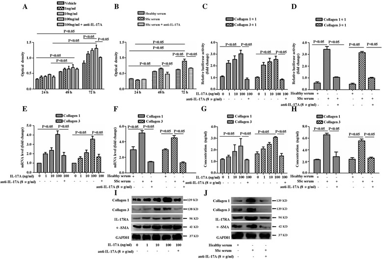 IL-17A derived from SSc patient serum promotes the proliferation, collagen synthesis and secretion of SSc patient-derived DVSMCs. (A) DVSMCs were treated with different doses of IL-17A for 24 h, 48 h, 72 h, and cell proliferation was tested using cell counting kit-8. (B) The cells were treated with the serum of SSc patients for 24 h, 48 h, 72 h, and cell proliferation was tested using CCK8. (C) The activity of collagen1α1 or collagen3α1 proximal promoter was test using a dual luciferase reporter gene assay after being treated with different doses of IL-17A for 24 h. (D) The activity of collagen1α1 or collagen3α1 proximal promoter was also detected after being treated with the serum of SSc patients and healthy subject for 24 h. Data were represented as mean ratios of Firefly to Renilla luciferase activity. (E) The cells were cultured in the indicated doses of IL-17A for 24 h, the gene expression of collagen 1 and collagen 3 was measured using real-time RT-PCR analysis. (F) The cells were stimulated with the serum of SSc patients and healthy subjects for 24 h, and the gene expression of collagen 1 and collagen 3 was measured using real-time RT-PCR analysis. (G) The cells were treated with different doses of IL-17A for 24 h, the concentration of collagen 1, collagen 3 was detected using ELISA. (H) The cells were treated with the serum of SSc patients and healthy subjects for 24 h, and the concentration of collagen 1, collagen 3 was also detected by ELISA. (I, J) The cells were treated with different doses of IL-17A, serum of SSc patients or healthy individuals for 24 h, and the expressions of collagen 1, collagen 3, IL-17RA and α-SMA were measured using Western blot. GAPDH was used as a loading control. The experiment was repeated three times, and the data are presented as means ± standard deviation.