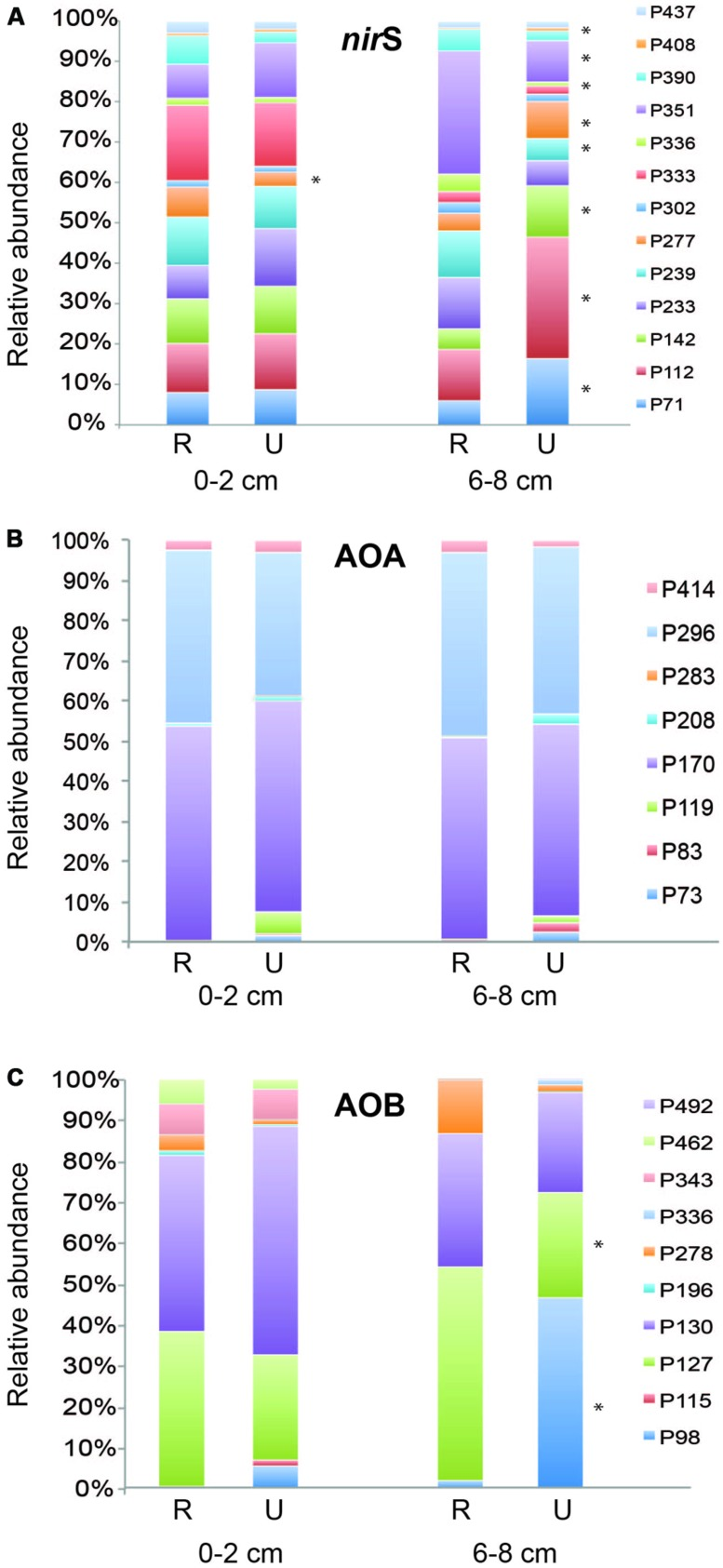 Mean relative abundance of individual TRFs from surface and deep sediments for nir S (A) , archaeal amo A (B) , and betaproteobacterial amo A (C) genes. Asterisks next to TRF bars indicate significantly different values ( P ≤ 0.05) of that TRF between restored (R) and undisturbed (U) marshes.