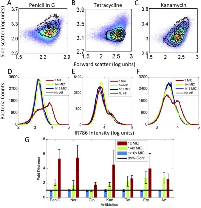 Antibiotic-induced signal changes. All data were collected in the presence of MH-IR786. (A to C) Scatter signal changes for different antibiotics. The pseudocolor plots are the no-antibiotic data. The overlay contour plots were data of the 1x MIC treatment. (A) Penicillin G, (B) tetracycline, (C) kanamycin. (D to F) Fluorescence signal changes from 1/16x MIC to 1x MIC and the no-antibiotic control. Gray curve: no antibiotic. Blue curve: 1/16x MIC. Green curve: 1/4x MIC. Red curve: 1x MIC. (D) Penicillin G, (E) tetracycline, (F) kanamycin. (G) The PB-sQF results of the 3D data. Black line: 99% confidence level from the test statistics between no-antibiotic control and 1/16x MIC data. All the data were normalized by the confidence level. Blue bar: 1/16x MIC. Green bar: 1/4x MIC. Red bar: 1x MIC.