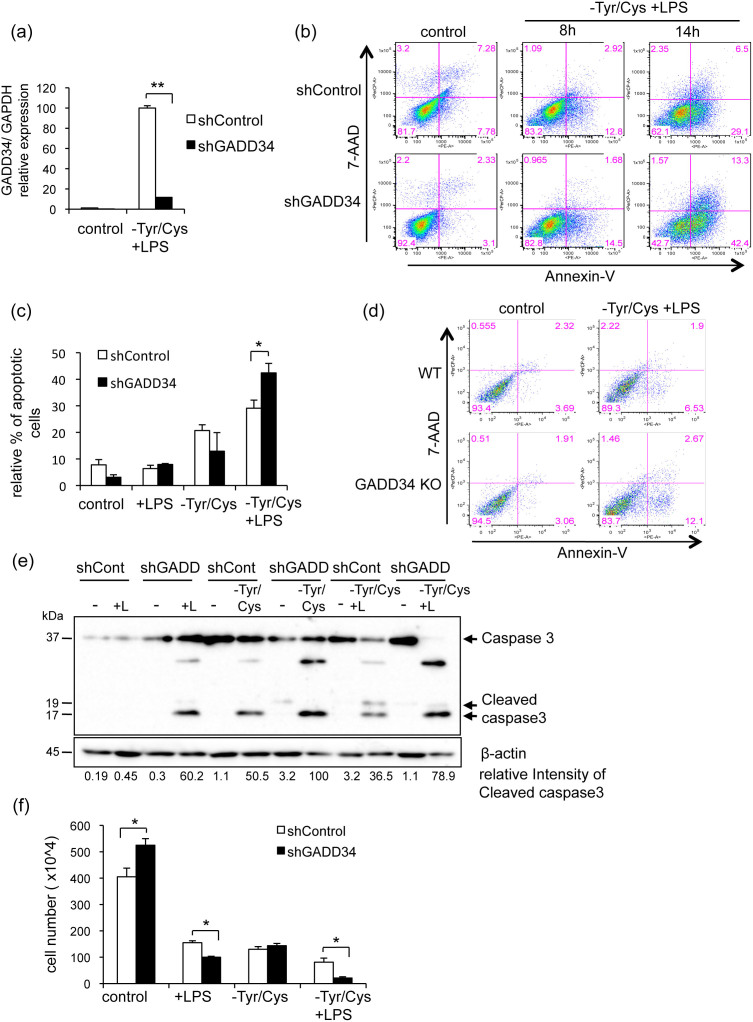 Loss of GADD34 increased cellular damage and apoptosis in <t>RAW</t> 264.7 cells treated with LPS and Tyr/Cys-deprivation. (a). Knockdown of GADD34 by shRNA was evaluated. Real-time PCR analysis of GADD34 expression in GADD34-deficient (shGADD34) and control RAW 264.7 cells (shControl) after treatment with LPS and Tyr/Cys-deprivation for 8 h. Graph shows the relative expression as means ± SE of three independent experiments. (b). GADD34-deficient or control RAW 264.7 cells were treated with DMEM + <t>10%FBS</t> (control) or LPS (1 μg/mL) in Tyr/Cys-deprivation medium for 8 h or 14 h. Cells were stained with 7-AAD and PE-labeled Annexin V and assessed by flow cytometry. (c). GADD34-deficient or control RAW 264.7 cells were treated with LPS with or without Tyr/Cys-deprivation for 14 h. Cells were stained with 7-AAD and PE-labeled Annexin V and assessed by flow cytometry. Relative % of Annexin V + 7AAD − apoptotic cells shown as means ± SE of three independent experiments. (d). BMDMs from GADD34 KO or WT were treated with LPS (1 μg/mL) combined with Tyr/Cys-deprivation for 8 h. Cells were stained with 7-AAD and PE-labeled Annexin V and assessed by flow cytometry. (e). GADD34-deficient or control RAW 264.7 cells were treated with LPS (+L; 1 μg/mL) and/or Tyr/Cys-deprivation for 24 h. Cell lysates were immunoblotted with anti-caspase 3 antibody and detected full length caspase 3 (35 kDa) and cleaved caspase 3 (17, 19 kDa). (f). GADD34-deficient or control RAW 264.7 cells were treated with DMEM + 10% FBS (control) or LPS (1 μg/mL) with or without Tyr/Cys-deprivation medium for 24 h. After treatment, cells were collected and counted by trypan-blue dye exclusion using a Burker-Turk cell count chamber. Data are means ± SE of cell number from three independent experiments. Data are representative of three independent experiments (b, d, e). * p