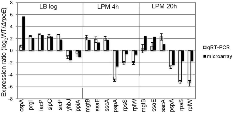 Validation of microarray results by qRT-PCR . Groups of genes both up- and down-regulated by σ E were selected from three growth conditions (LB log, LPM 4 h, and LPM 20 h) based on microarray results, and validated by qRT-PCR using primers designed inside those genes. The results are plotted on a log 2 -scale comparing WT strain to rpoE -deletion strains. Values are normalized with gyrB mRNA levels and represent the average of RNA prepared from independent biological triplicates.