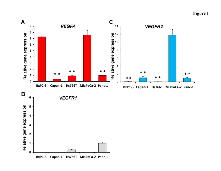mRNA expression of VEGFA (A), VEGFR1 (B) and VEGFR2 (C) in pancreatic cancer cell lines mRNA expression was determined with real-time RT-PCR. MiaPaCa-2 significantly expressed VEGFA more than other cell lines (p