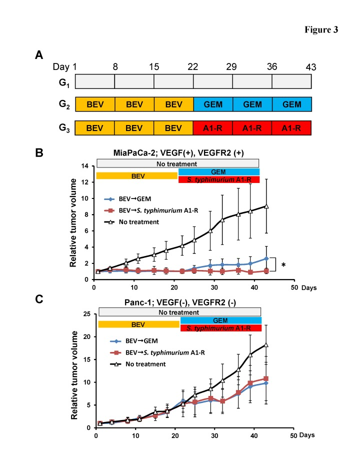 Efficacy of BEV treatment on pancreatic cancer cell lines which have different levels of VEGFA and VEGFR2 expression (A) Schema of treatments on subcutaneous tumors. Based on RT-PCR results, MiaPaCa-2 was determined to be VEGFA-positive and VEGFR2-positive. Panc-1 was determined as VEGFA-negative and VEGFR2-negative. In order to determine the efficacy of BEV on pancreatic cancer cell lines with different levels of VEGFA and VEGFR2 expression, subcutaneous tumors from MiaPaCa-2 and Panc-1 cells were grown in nude mice and randomized to 3 groups as described in the Materials and Methods. (B) BEV significantly reduced the growth of the MiaPaCa-2 tumor compared to the control on Day 22 (p