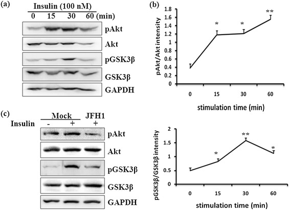 Effect of HCV infection on insulin-induced phosphorylation of Akt and GSK3β. Huh7.5.1 cells were seeded in a 24-well plate and subjected to serum-free incubation for 20 h, followed by insulin stimulation for the indicated time (0, 15, 30, and 60 min). Western blotting with indicated antibodies revealed a time-dependent change in the phosphorylation of Akt (a) and GSK3β (b) . Furthermore, Huh7.5.1 cells and HCV-infected cells were stimulated with 100 nM insulin for 30 min or left untreated. Extracted proteins were analyzed with antibodies against pAkt, Akt, <t>pGSK3β,</t> and GSK3β (c) .