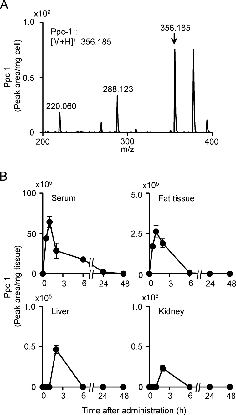 Detection of Ppc-1 in cells and tissues. (A) RPE cells were treated with 10 μM Ppc-1 for 12 h, and then lipid fraction was prepared from cells, and analyzed on HPLC-MS/MS system B. The positions of Ppc-1 ([M+H] + = 356.19 m/z ) and its derivatives are indicated. (B) Sera and tissues were collected from mice at the time points indicated after a single shot of Ppc-1 (0.8 mg/kg), and the lipid fraction was prepared and analyzed similarly. The peak areas were calculated, and the results are expressed as mean and SD.
