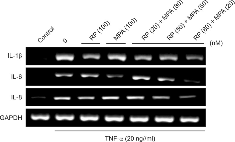 Effects of a combination of rapamycin (RP) and mycophenolic acid (MPA) on tumor necrosis factor (TNF)-α-induced expression of pro-inflammatory genes in HaCaT cells. HaCaT cells were pre-incubated for 24 h and then stimulated with TNF-α (20 ng/ml) after a 1 h pretreatment with RP, MPA, or a combination of the two drugs for 6 h. Pro-inflammatory gene expression was analyzed by reverse transcription-polymerase chain reaction (RT-PCR) using specific primers. The experiment was repeated independently at least three times. IL: interleukin, GAPDH: glyceraldehyde 3-phosphate dehydrogenase.